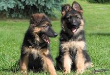 Puppies! / by DeLona Naron