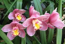 Flora - Orchids / by Deni Rosenberry