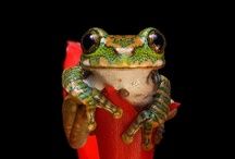 Nature - Frogs/Toads / by Deni Rosenberry