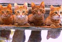 yam - cats & kittens