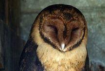 I *heart* Owls!! / by Theresa Wade