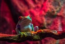 Love a Lizard/ Friend a Frog / Frogs and lizards and snakes . . . oh, my for boys and girl who like such creepy things, like me . . . and my beautiful grandsons, Rush, and Roman. / by Sacred Fox