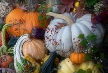 Autumn Harvest / by Kathy Thomas