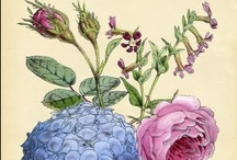 Botanical Art / by Kathy Thomas