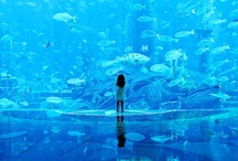Marine Aquariums / Marine reef tanks, live rock scapes, corals and lots of fish!