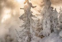 Fantastical Beauty / by Theresa Wade