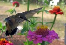 Hummingbirds & Birds Who Know Words / by Denise Petrey/ Sacred Fox