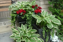 Garden & Flowers Ideas