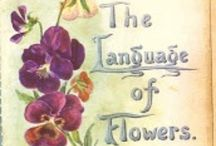 The Language of Flowers / by Kathy Thomas