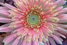 Flower Power / by Kathy Thomas
