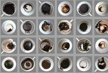 Coffee adict?