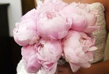 Wedding In Pink / by Kendall Ryndak