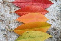 Homeschool Autumn / by Amie Lewis