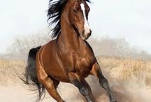 running like a horse