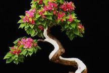 Japanese Bonsai 和 / by Cathy Perez