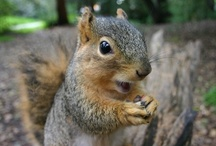 Holidays: Squirrel Appreciation Day / Jan 21, great theme-day for the kids, and a great opportunity to teach them about something. / by Emily Day