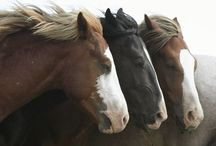 Horse Power / All about horses / by Tina Sloan