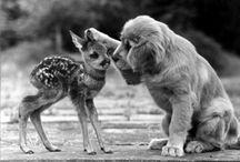 c u t e + f l u f f y / cutest animals
