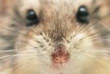 hamster...forever...