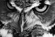 All things OWL!