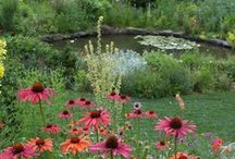 GARDEN Spaces / Spaces/gardens I like / by Ruth Hill