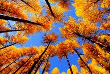 """AUTUMN / I have always lived in places that had all of these wonderful fall colors, but now I live where there's only yellows/ golds - so this board is my """"real"""" fall this year. - BEAUTIFUL!"""