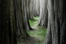 TREES / by Ruth Hill