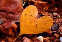 HEARTS in Nature / by Ruth Hill