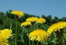 Natural Healing / Natural healing and natural remedies