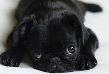 Just doggone cute