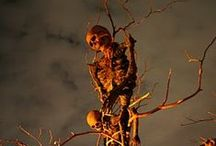 Halloween Decorations / by M. Free
