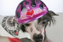 Dog Helmets / Our best selling dog helmets and airbrushed dog helmets