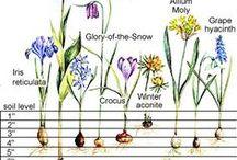 Gardening Bulbs, seeds, and starts