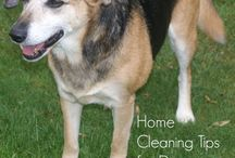 Pets and Animals / Pet and Animals Hints and Tips
