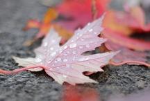 Autumn / by Lauren Hink