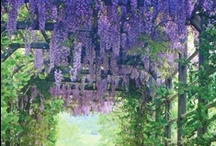 Flower Power / beautiful flower arrangements / by Diane Grove