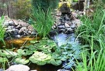 Koi, Goldfish, Garden Ponds
