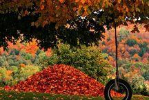 Fall Y'all / by Jamie Odom