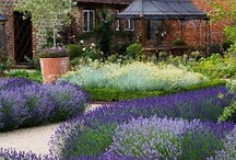 Garden: My little piece of paradise / Ideas and plans for my own patch  / by Jayne LM
