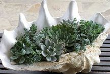 Succulents / by Jayne LM