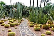 Gardens of Wonders in Morocco / Have you ever heard about Arabian Nights and the oasis in the middle of the desert? These gardens are true inspiration for your imagination...