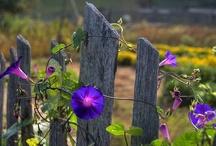 My Little Garden Ideas / by Valerie Hileman