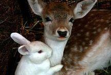 Animal Friends / by Deb Brenner