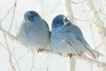 Birds of a Feather / by Deb Brenner