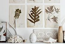 Pressed Botanicals / A reminder of last summer's garden and a promise of spring to come.