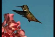 Hummingbird don't fly away! / by Deb Brenner