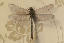 collection - dragonfly