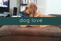 dog love / Ideas for the dog in your life.