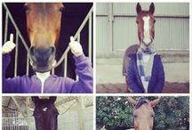 """Photos des fans Facebook - """"Jamais sans mon cheval"""" / Les fans Facebook d'Equidia ont été invités à nous envoyer leurs plus belles photos sur ce thème. Voici leurs oeuvres :)  Si vous aussi, vous souhaitez nous faire parvenir vos photos, devenez fans de notre page Facebook (www.facebook.com/Equidia) !"""