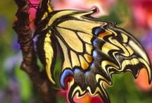 Elusive Butterfly / Butterflies are free but elusive.   / by Deb Brenner